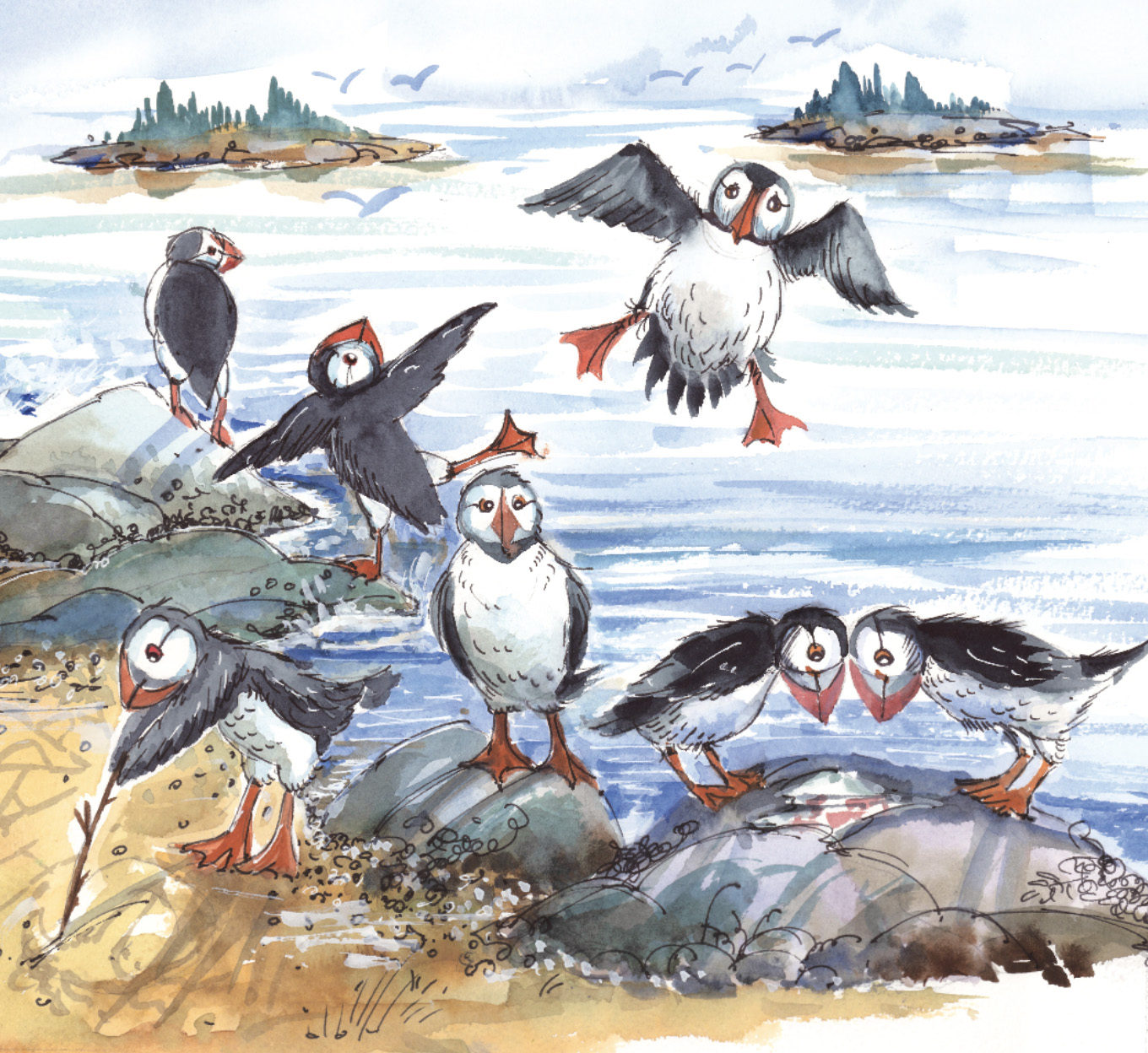 maine-birthday-book-puffins